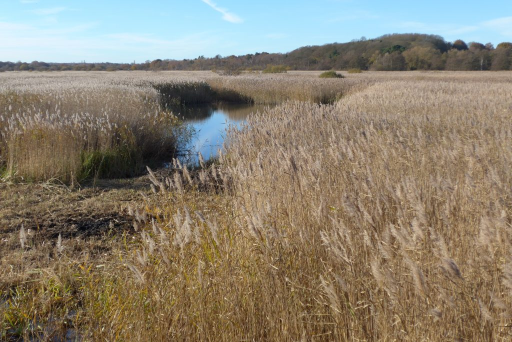 The reed beds at Minsmere are vast!